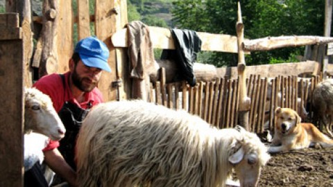 Aromanii in Albania
