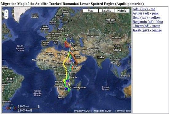 S-a intors in Romania prima acvila urmarita prin satelit. Vezi harta migratiei lui Benjamin.