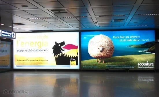 Miorita din Aeroportul din Roma