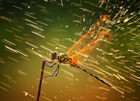 Winners of the National Geographic Photo Contest 2011