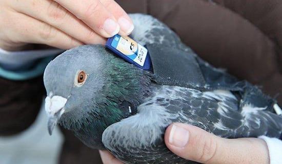 Asa va arata schimbul de informatii post-ACTA