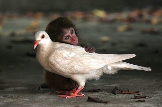 Prietenii animale neobisnuite