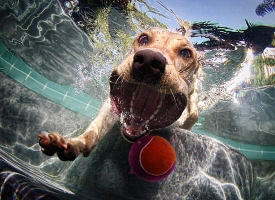 Fotografii cu câini sub apa