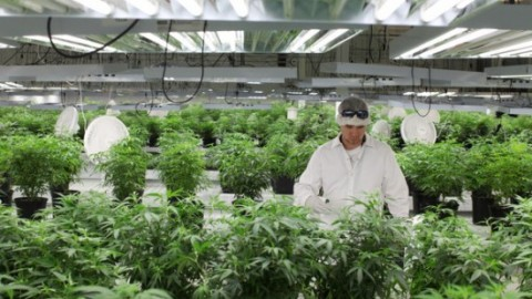 The New York Times x Tweed Cannabis Factory