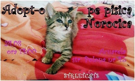 Streetcats @ Acuarela
