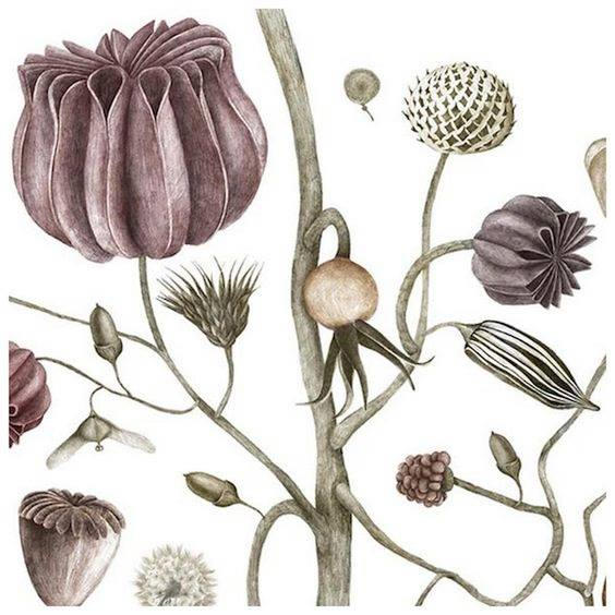 Ilustrație botanică la Gradina Botanică Cluj-Napoca