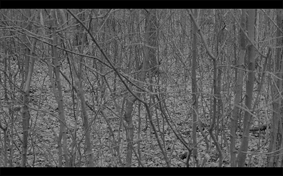 Abis, 2019 Matei Bejenaru video still small