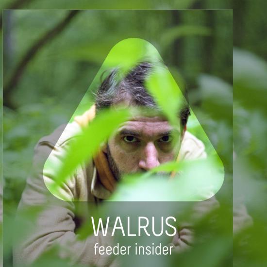 feeder insider interview with Walrus